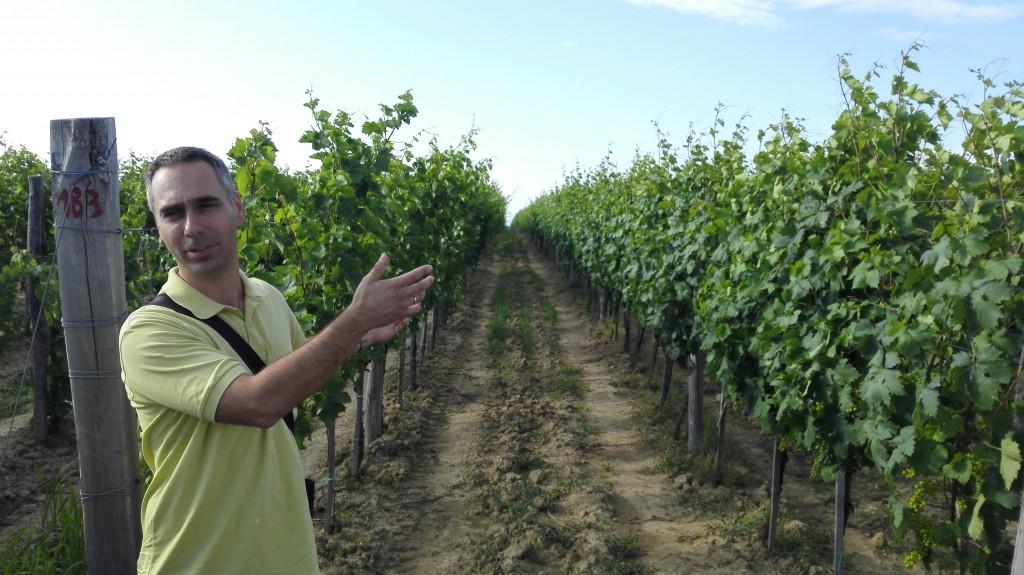 Nikola Matalj, vlasnik vinarije Matalj