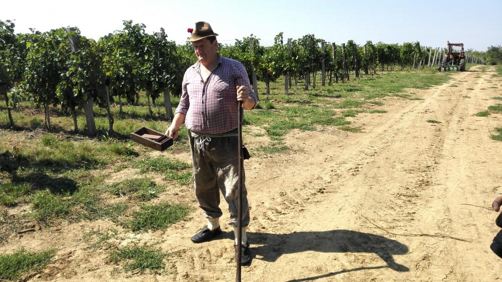 """pudar"" - guardian of the vineyards"