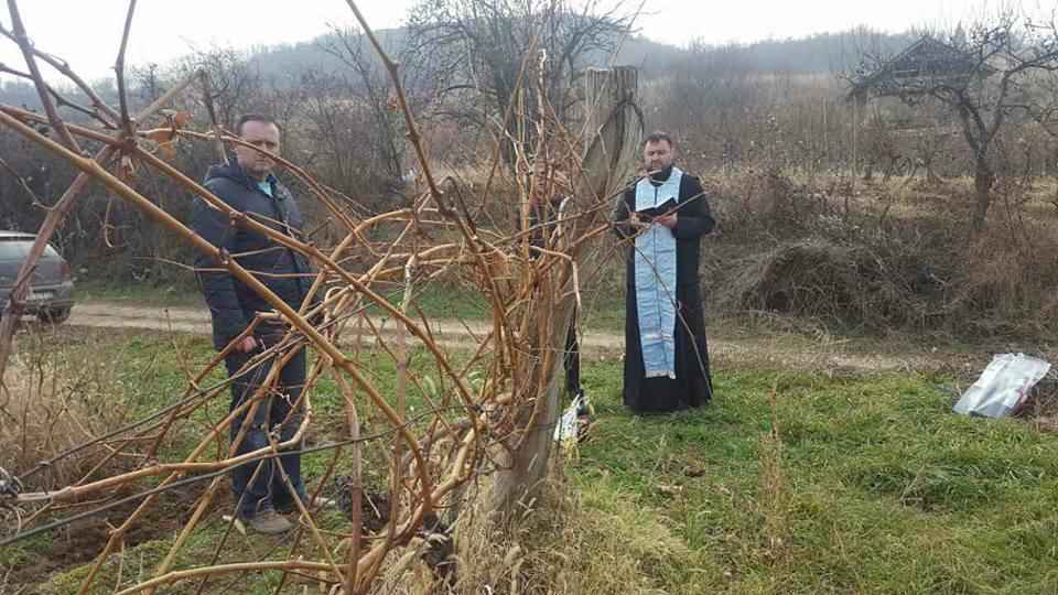 Dan Svetog Trifuna na Fruškoj Gori (foto: vinarija Kiš)