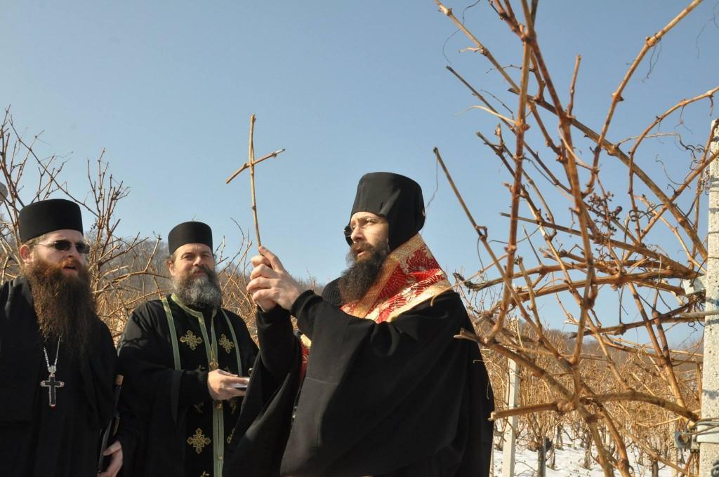 Dan Svetog Trifuna u Negotinu (izvor facebook)