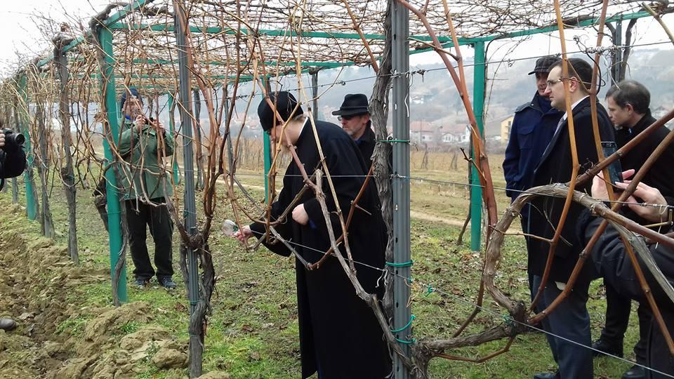 Dan Svetog Trifuna u Sremskim Karlovcima (foto: Žene i vino )