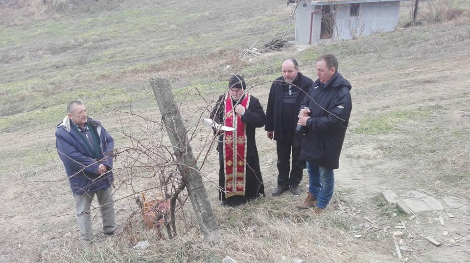 Dan Svetog Trifuna u Slankamenu (foto: vinarija Stojanović)