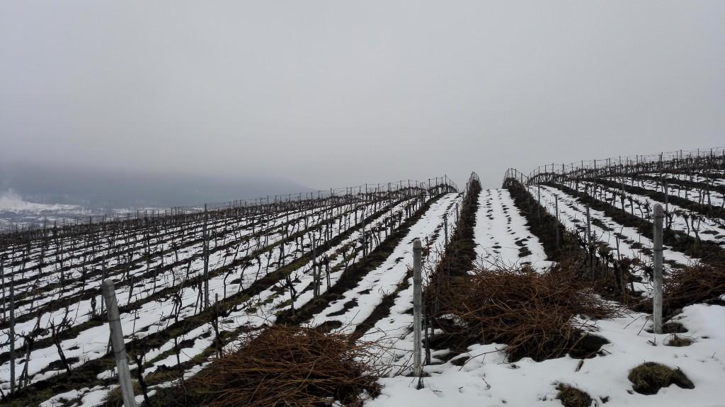 vinogradi Kotnari Vinske Kuće pod snegom