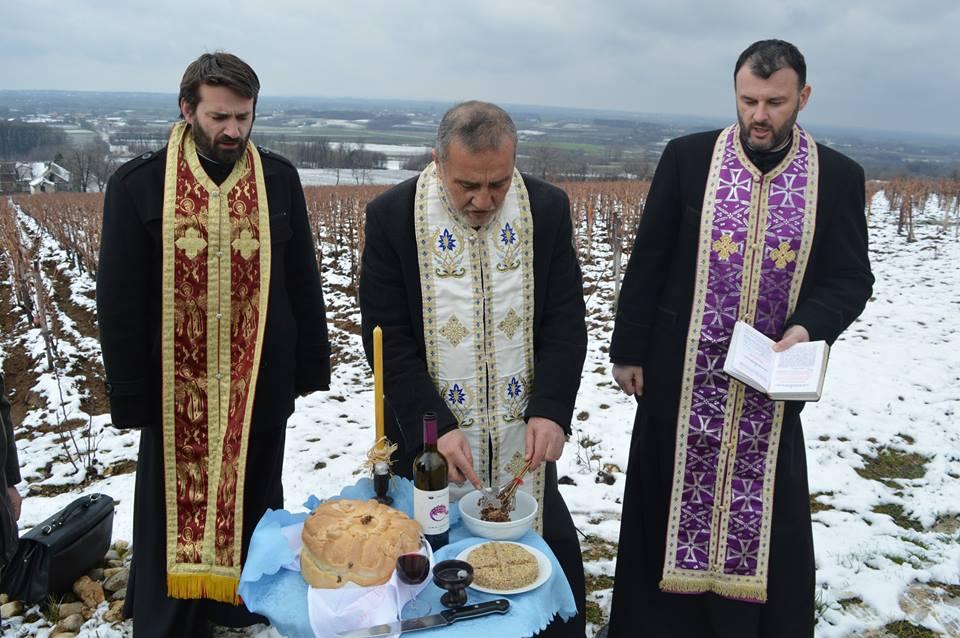 Dan Svetog Trifuna u vinariji Despotika
