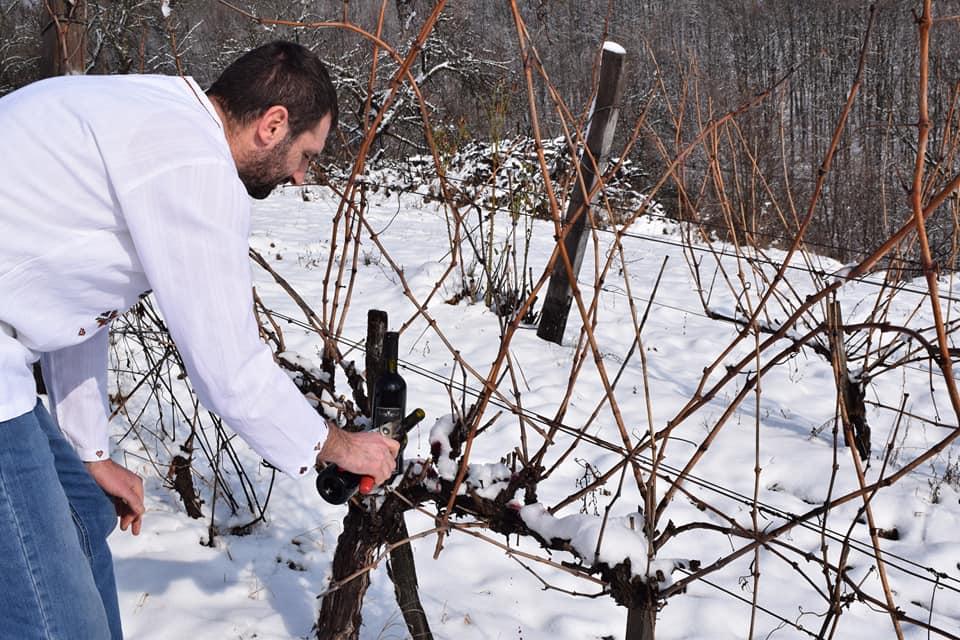 Dan Svetog Trifuna u vinogradarskoj oazi Šarani (foto: D. Milošević)