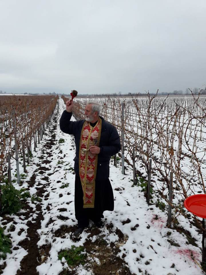 Dan Svetog Trifuna u vinariji Red Bird