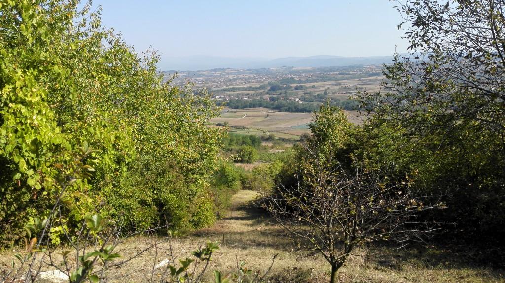 parcela vinarije Milanov podrum na južnoj strani Varine za budući vinograd prokupca