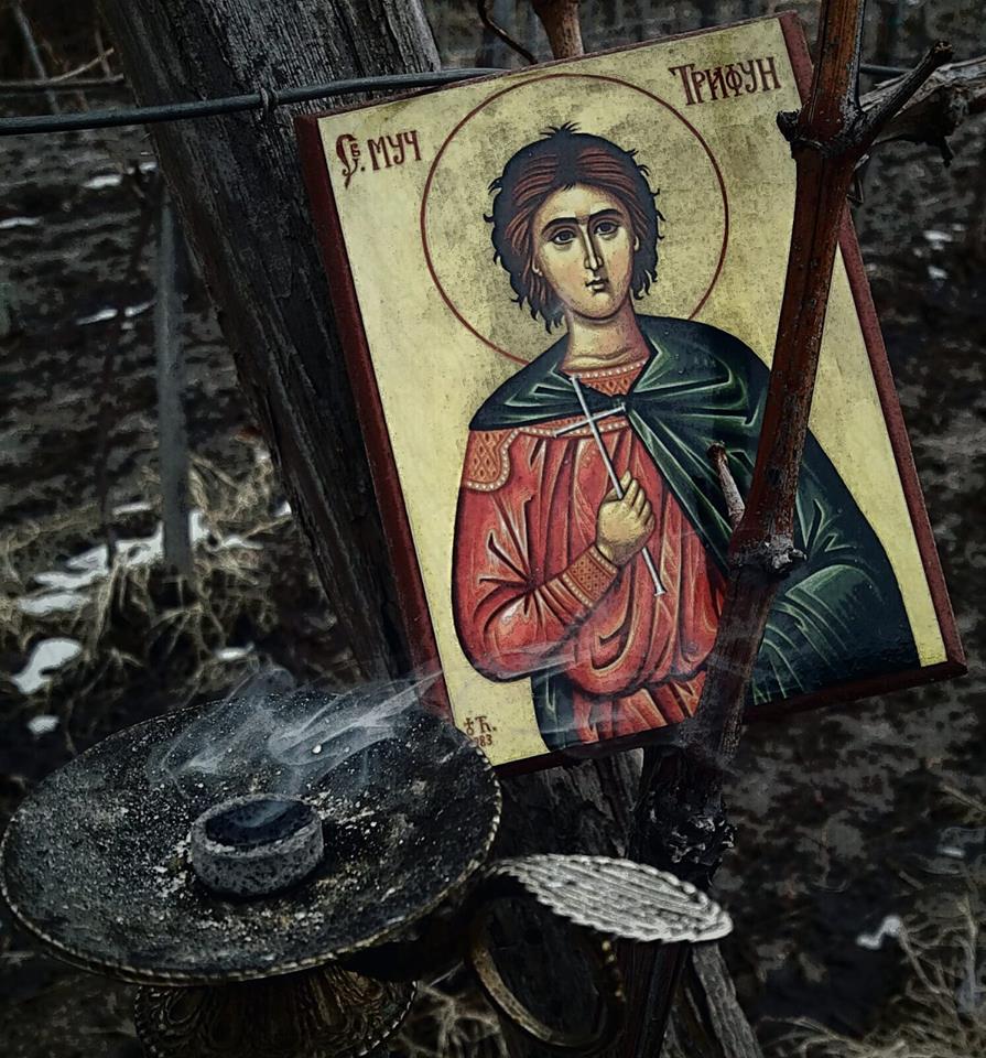 Dan Svetog Trifuna u niškom kraju (foto: Izba Jovanović)