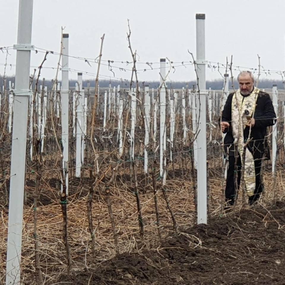 Dan Svetog Trifuna u vinariji Galot (foto: N. Vujačić)